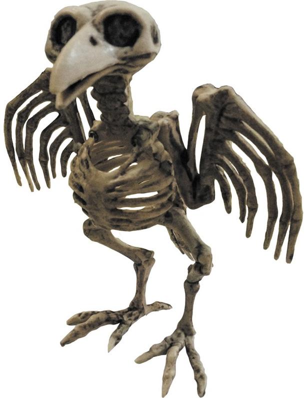 Vogel skelet decoratie halloween decoratie en goedkope for Goedkope decoratie