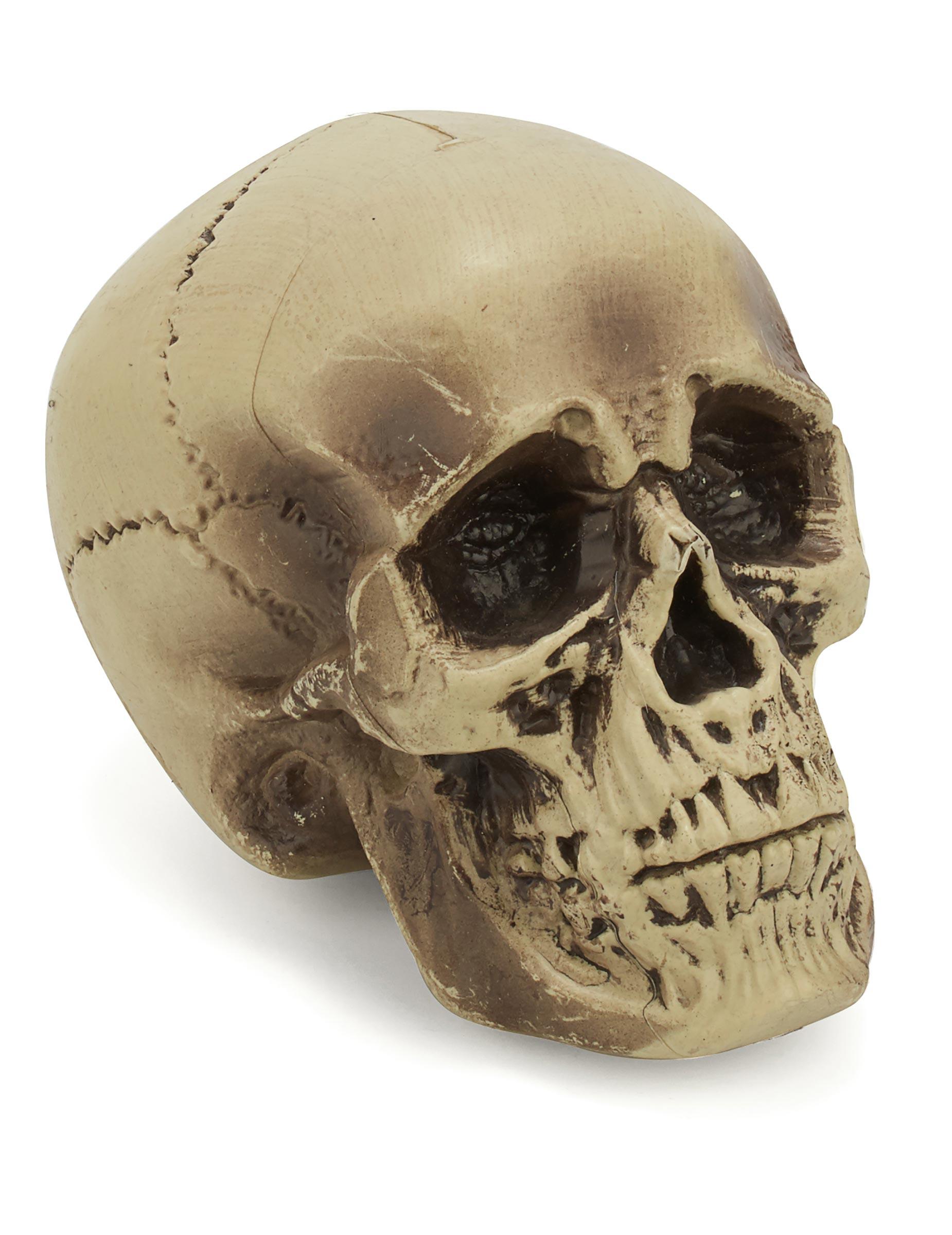 Plastic schedel decoratie decoratie en goedkope for Decoratie schedel