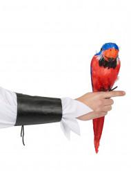 Rode en blauwe Hawaïaanse papegaai