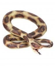 Python slang