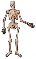 Versiering skelet Halloween artikel