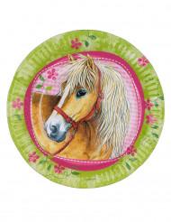 8 paarden bordjes