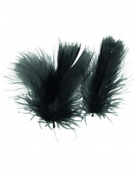 Zwarte veertjes