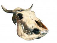 Muurdecoratie schedel Westernwoestijn