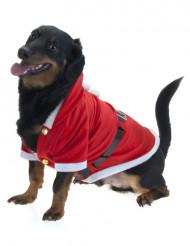 Kerst jasje voor honden
