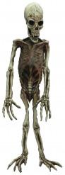 Halloween apen skelet decoratie