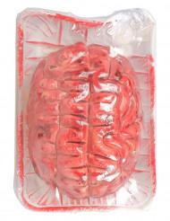 Bloedige hersenen voor Halloween