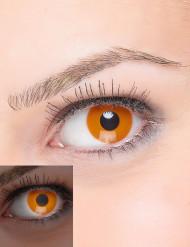 Oranje lenzen