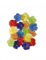 Veelkleurige bloemen