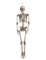 Skelet Hangvesiering voor Halloween !
