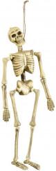 Skeletten versiering voor Halloween