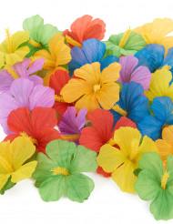 24 Hawaii bloemen
