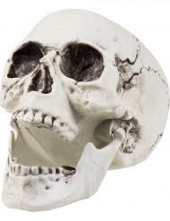 Doodskop decoratie 24 x 18 cm Halloween