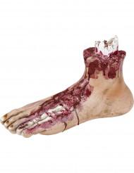 Bebloede afgehakte voet voor Halloween