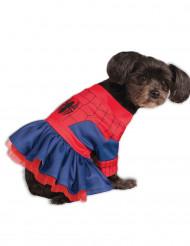Spider Girl™ kostuum voor honden