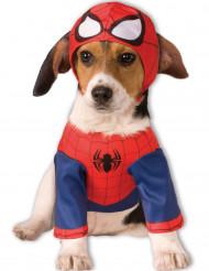 Spiderman™ kostuum voor honden
