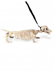 Honden skelet aan riem