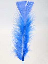 100 blauwe veren