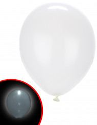 5 Witte LED ballonnen Illooms®