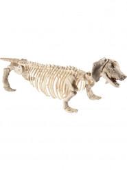 Hond skelet decoratie
