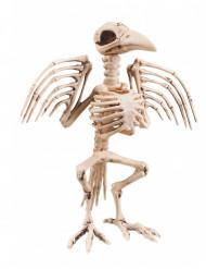 Raaf skelet decoratie