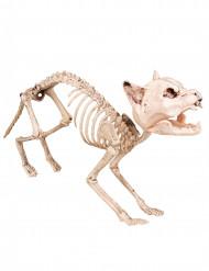Kat skelet decoratie