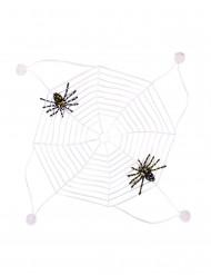 Fosforescerend spinnenweb met spinnen
