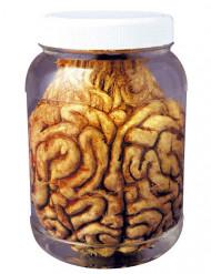 Pot met hersenen decoratie