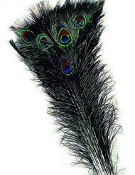 Groen met blauwe pauw veer