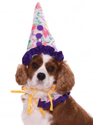 Kleurrijk clownskostuum voor honden