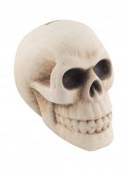 Decoratieve schedel spaarpot