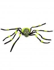 Enorme spin met doodskop