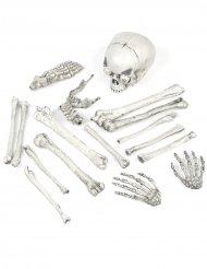 Lichtgevende doodskop en schedel decoraties