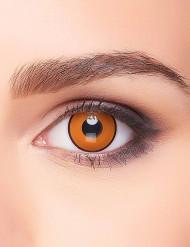 Raven ogen contactlenzen voor volwassenen