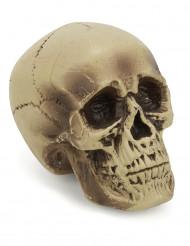 Plastic schedel decoratie