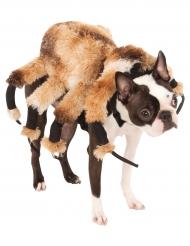Enorme spin kostuum voor honden
