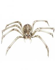 Spinnen skelet voor Halloween