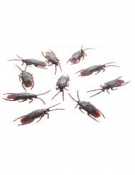 10 kakkerlakken decoraties