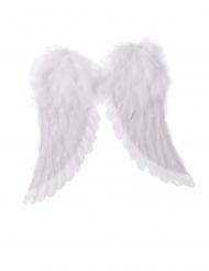 Witte engelen vleugels 42 x 46 cm