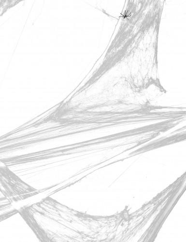 Wit spinnenweb met spinnen decoratie-1