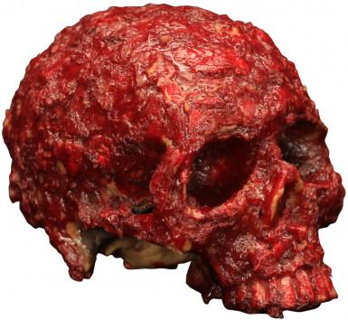 Rottende bloederige schedel