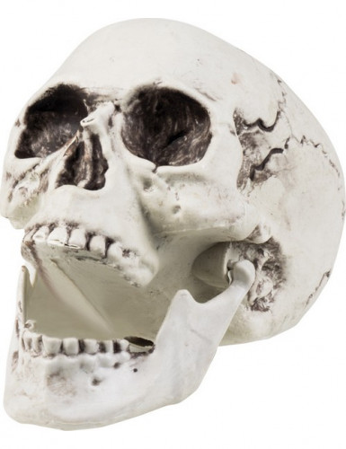 Skull Maxilla met beweegbare kaak (17 x 15 cm)