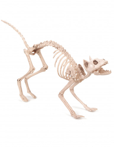 Skelet kat decoratie