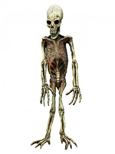 Skelet Voor Halloween.Halloween Apen Skelet