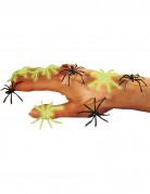 Zwarte en fosforescerende spinnen