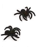 Set van twee Halloween spinnen
