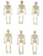 6 skelet decoraties